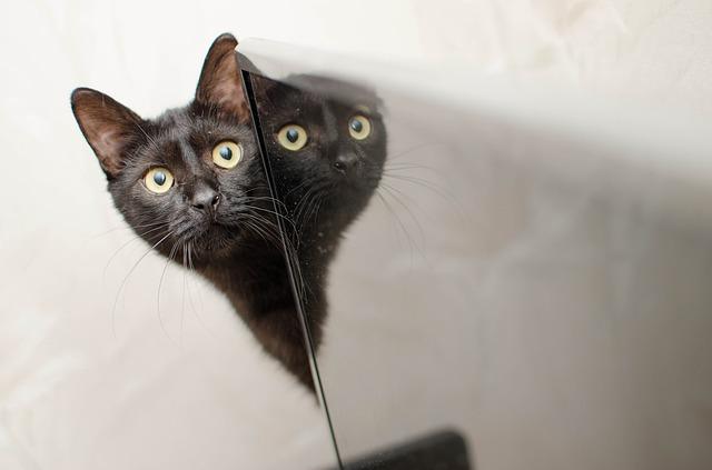 macska-féltékenység-kezelése