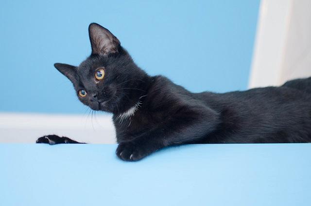macska-fogamzásgátló mellékhatásai