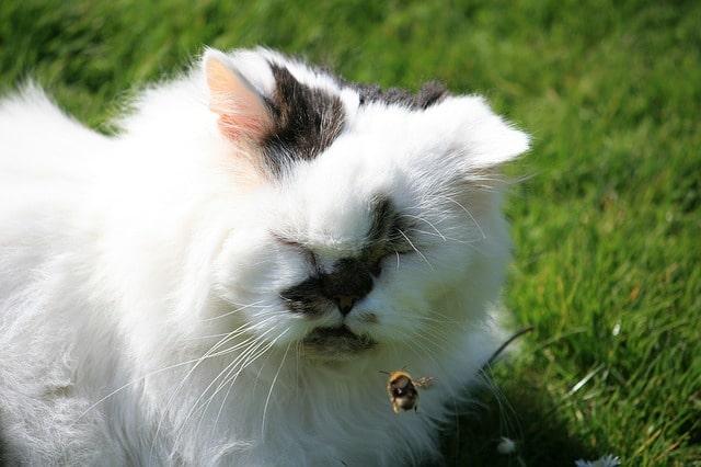 macska-bogarat-eszik-méh