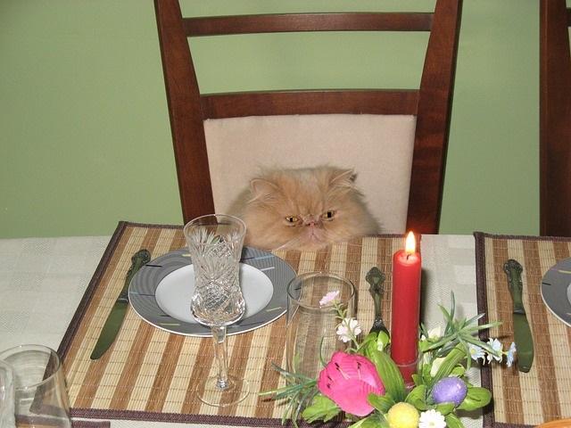 meddig-él-egy-macska-