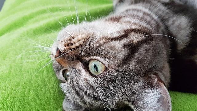 miért-kakil-be-a-szobatiszta-macska