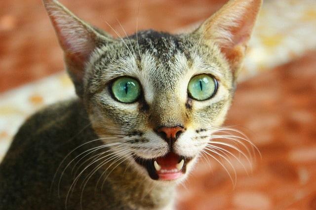 mikor-váltja-a-macska-a-fogát