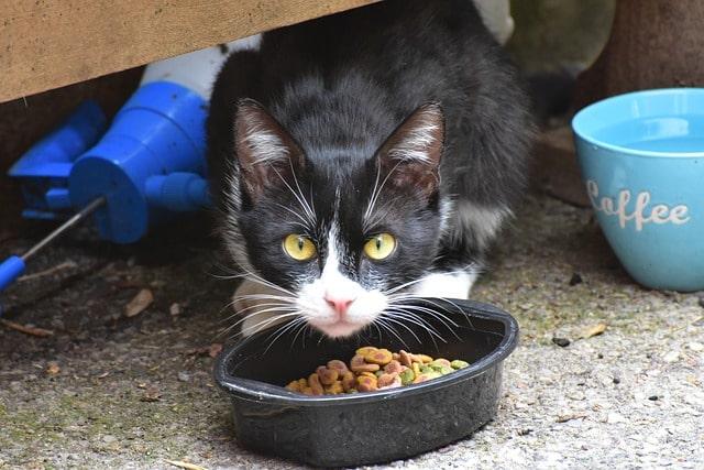 macska-csak-száraztápot-eszik