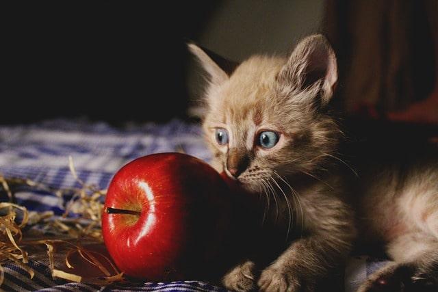 milyen-zöldséget-ehet-a-macska
