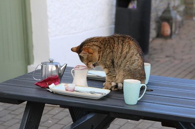 macska-leszoktatása-az-asztalról