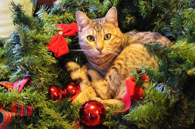 karácsonyi-ajándék-cicáknak