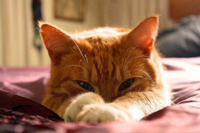 mennyi-alom-kell-a-macskának