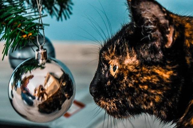 karácsony-macskával