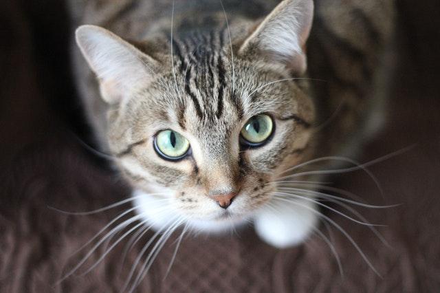 rossmann-winston-macskaeledel-vélemény
