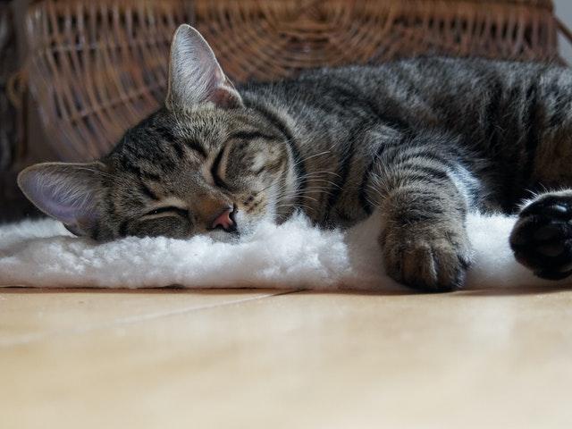 a-macska-egész-nap-fekszik