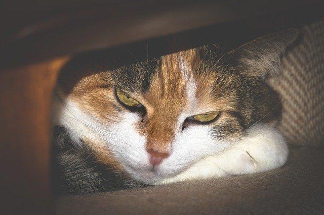 beteg-macska-elbújik