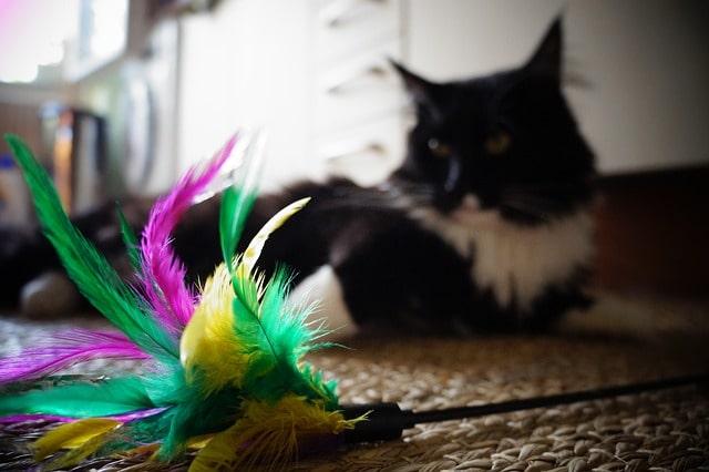 macska-tollsöprű-játék