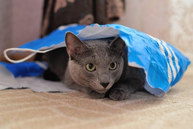mennyibe-kerül-a-macska-ivartalanítása