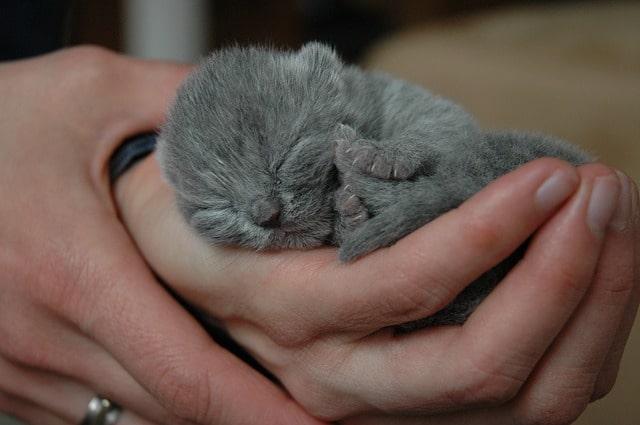 mikor-lehet-megfogni-a-kiscicákat
