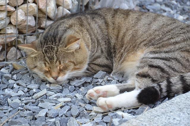 macska-öregedés-jelei