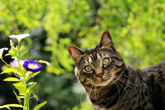a-macska-mikortól-ivarérett