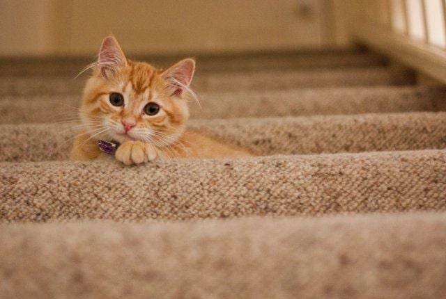 honnan-tudom-mennyi-idős-a-talált-cica