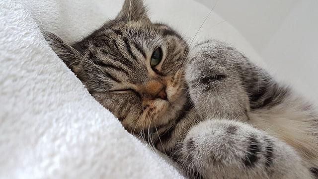 meddig-alszik-a-macska-az-altatás-után