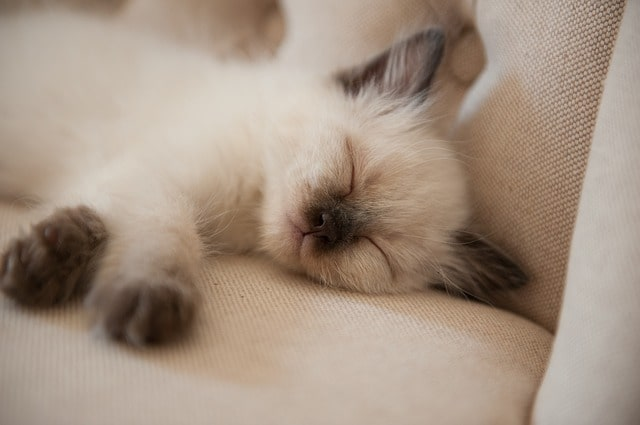 hol-szeret-aludni-a-macska
