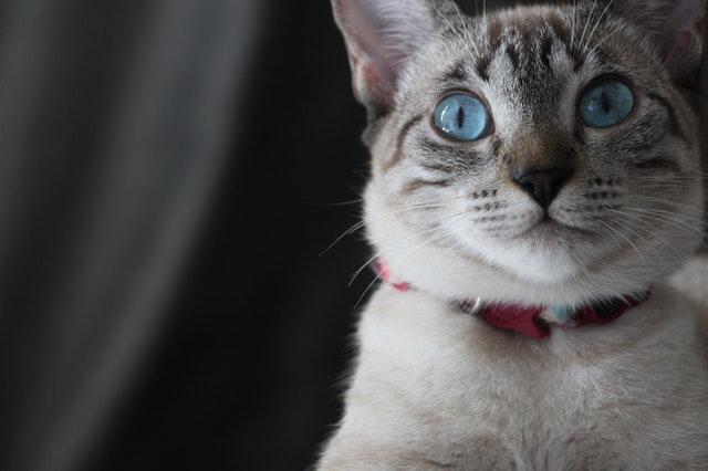 macska-fenék-tisztítása