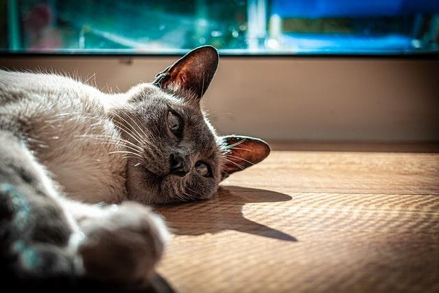 milyen-gyakran-kell-cserélni-a-macskaalmot