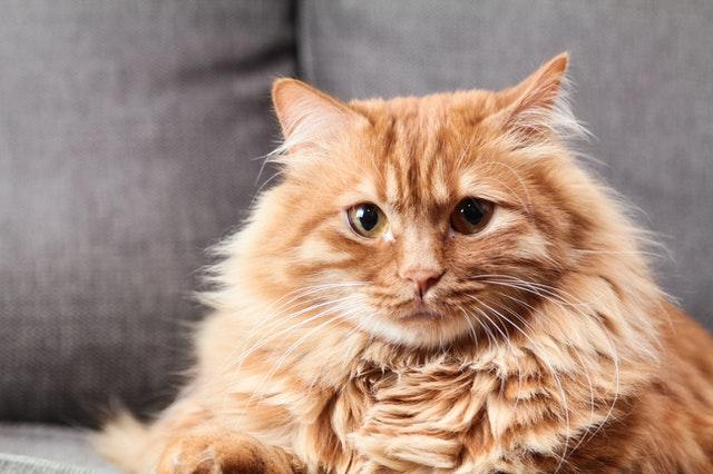 mitől-lesz-szép-a-macska-szőre