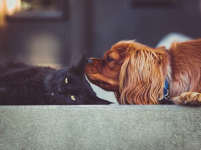 macska-ehet-kutyakaját