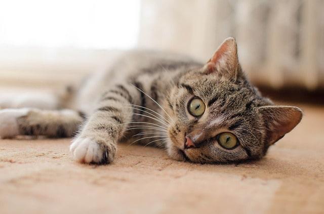macska-megismeri-a-gazdáját